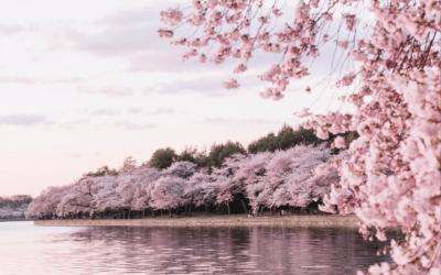 Embracing the Seasons Series – Spring: Welcoming Change